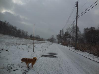 29日   火曜日  小雪  0度_f0210811_931116.jpg