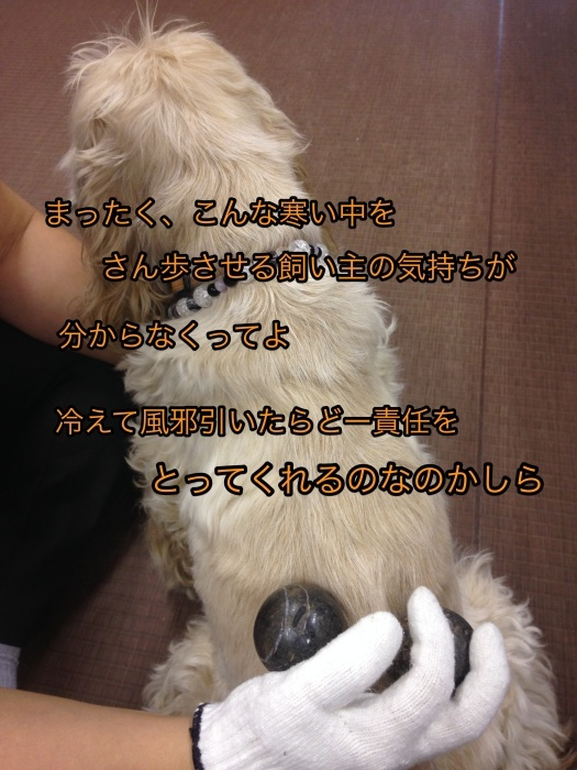 b0067012_01515906.jpg