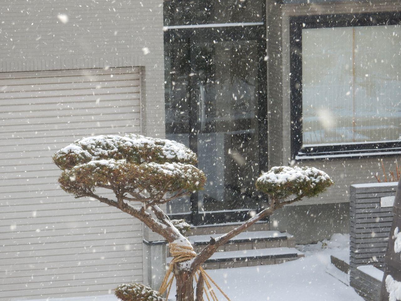 外は雪 中ではシノブが成長中_c0025115_21145854.jpg