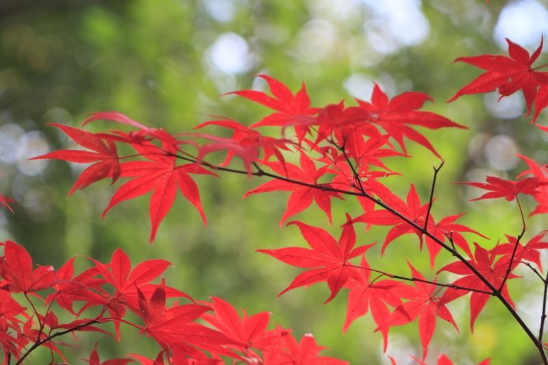 吉田山荘_b0251957_23164984.jpg