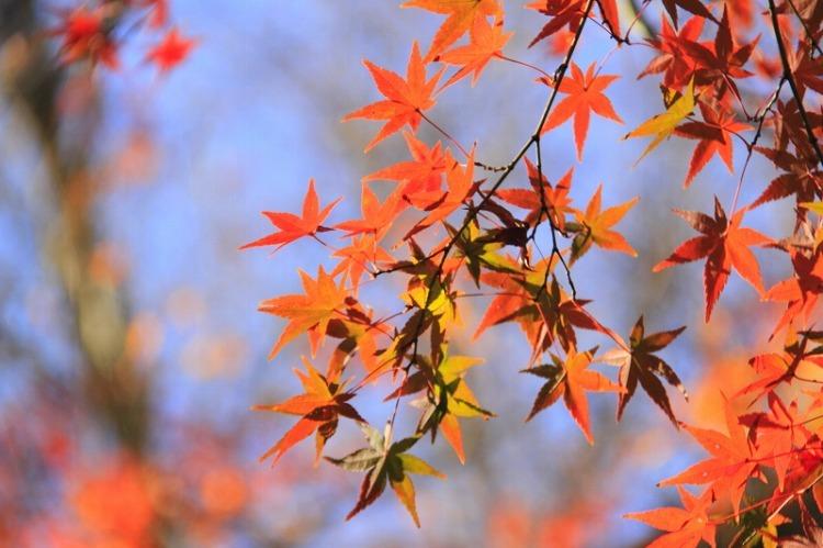 吉田山荘_b0251957_23513116.jpg