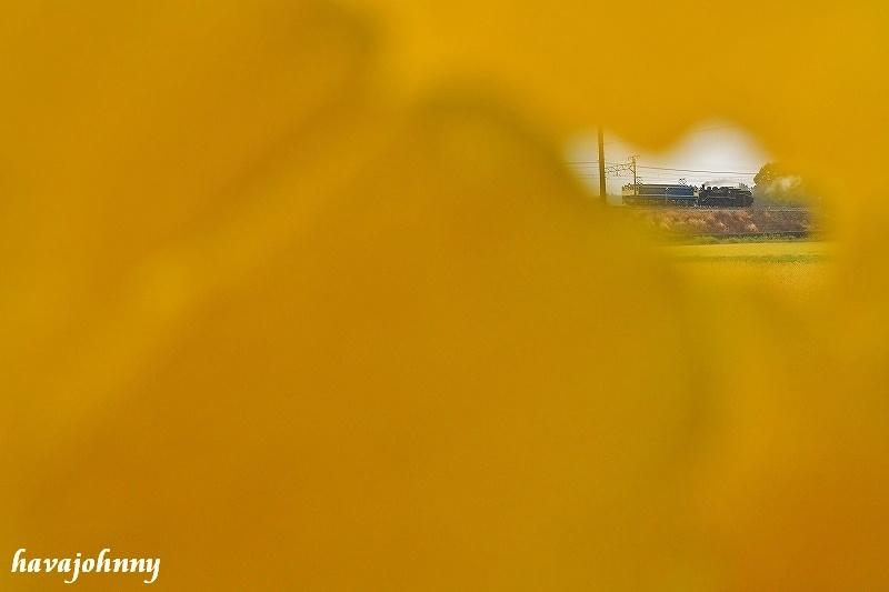 銀杏色に染まって~北びわこ紅葉狂想曲パート3~_c0173762_2031991.jpg