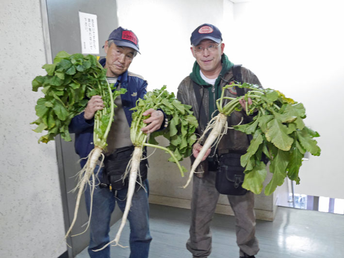 種蒔きから3ヶ月超⑧鎌倉だいこん栽培記録11・28_c0014967_9535558.jpg