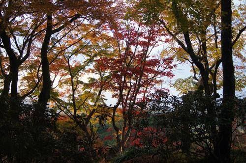名残の紅葉 2 ~ 談山神社&岡寺_e0181373_215825100.jpg