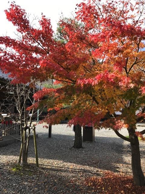 京都_f0204295_11245157.jpg