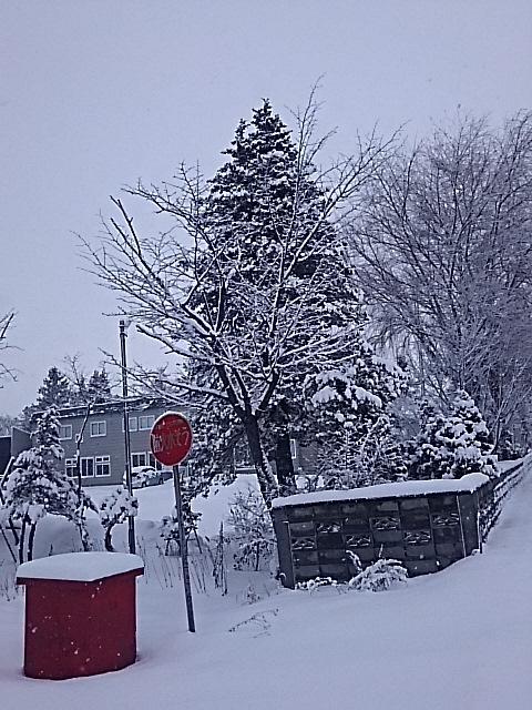 ♬冬が始まるよ~♬_f0316507_21112158.jpg