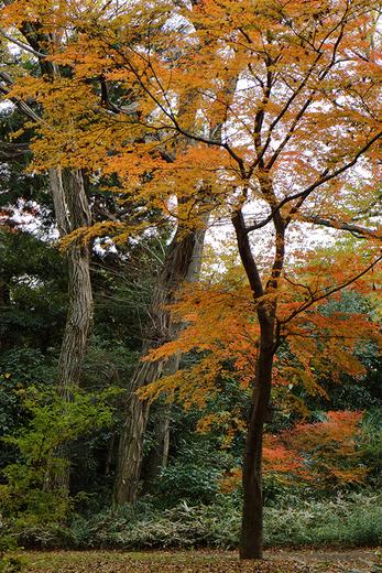 井の頭自然文化園のリス!_b0194208_22581683.jpg