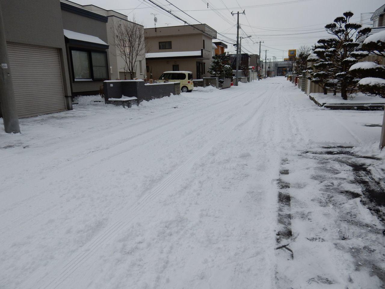 冬が本格化するなかサザンカのつぼみ膨らむ_c0025115_21435465.jpg