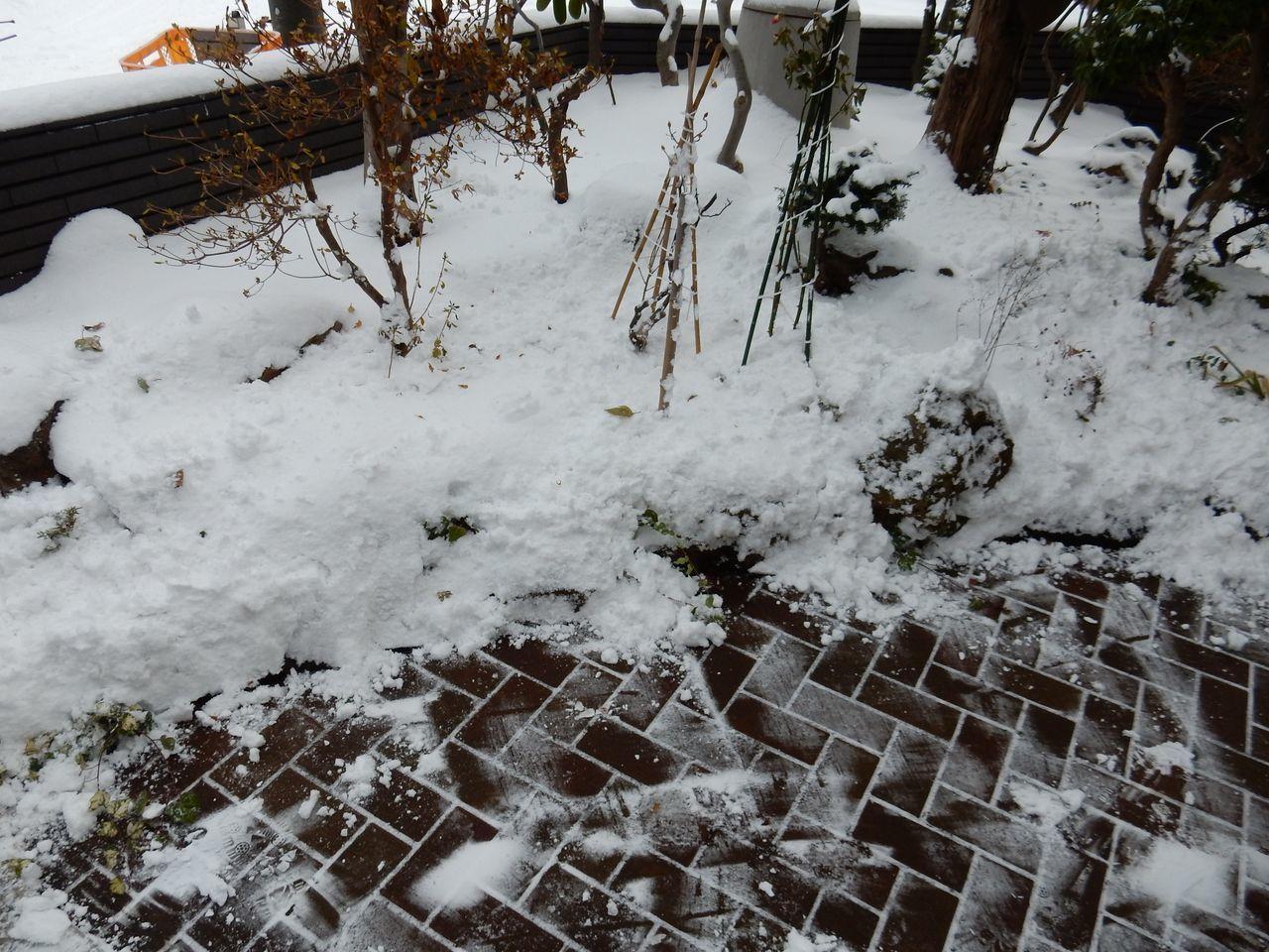 冬が本格化するなかサザンカのつぼみ膨らむ_c0025115_21440317.jpg