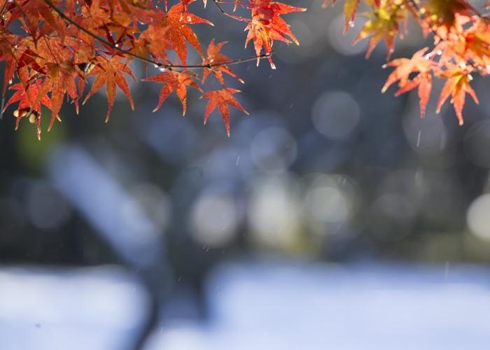 紅に雪解け水_e0238623_11395510.jpg