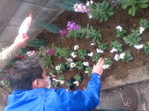 花を植えました♪_b0216924_154850.jpg