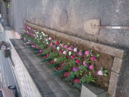 花を植えました♪_b0216924_1552873.jpg