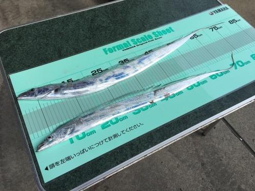 釣り大会の夜は…_a0132631_20115479.jpg