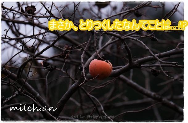 b0115642_22125199.jpg