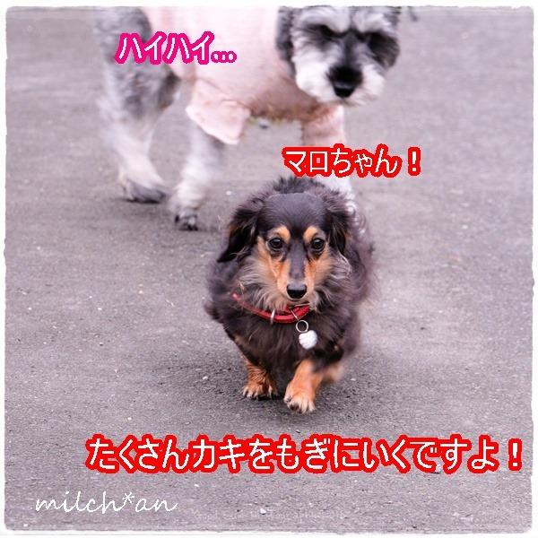 b0115642_2295174.jpg