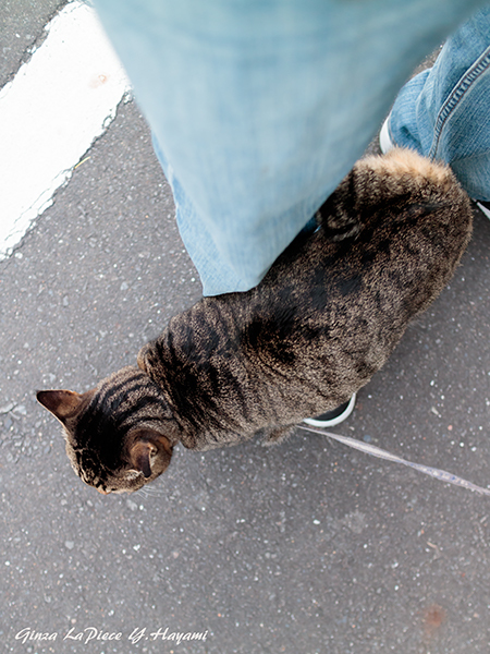 猫のいる風景 近所のレイコちゃん_b0133053_02003768.jpg