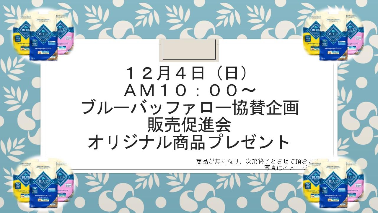161130 ウインターセール&イベント告知_e0181866_1117687.jpg