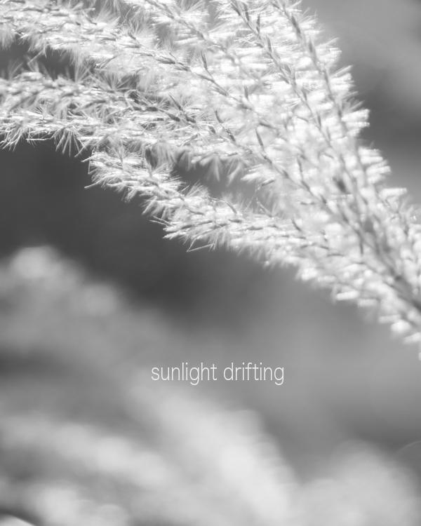 秋の陽だまり。_b0022268_19525028.jpg