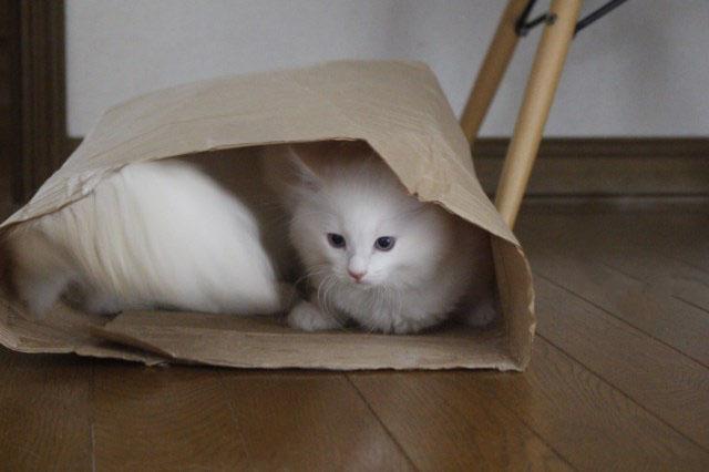 やっぱり袋が好き_a0285571_2253329.jpg