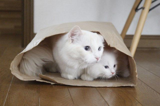 やっぱり袋が好き_a0285571_22534251.jpg
