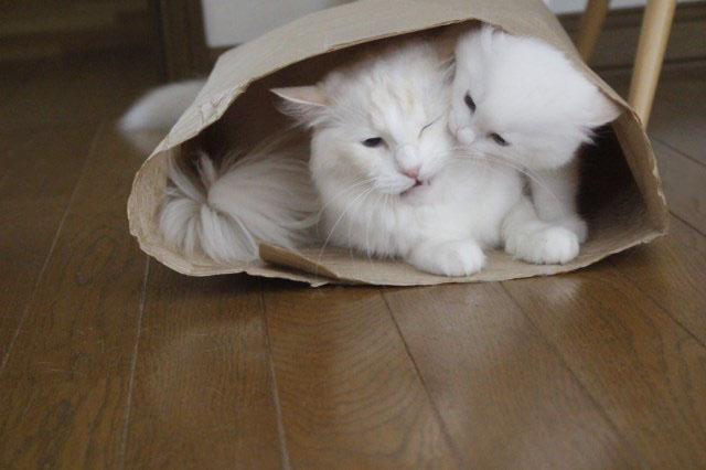 やっぱり袋が好き_a0285571_22535093.jpg