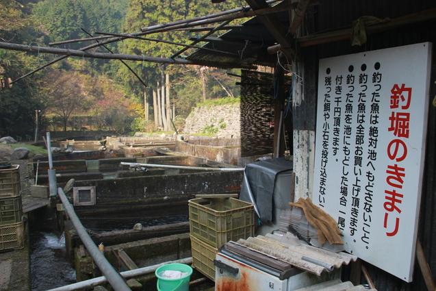鈍川渓谷の釣り堀  門岡養魚場_f0098083_23284860.jpg