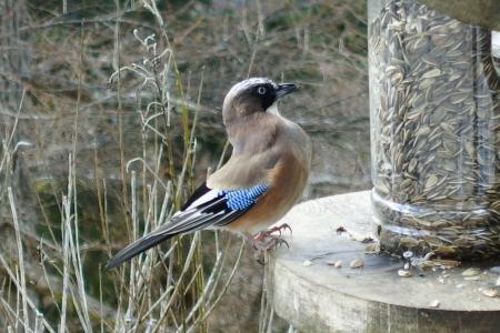 野鳥が沢山見られる季節_e0120896_08565005.jpg