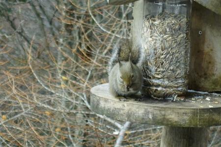 野鳥が沢山見られる季節_e0120896_08574550.jpg