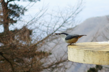 野鳥が沢山見られる季節_e0120896_09061616.jpg