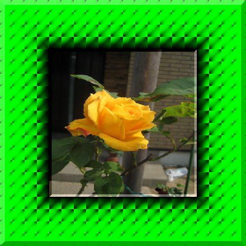 b0126308_074645.jpg