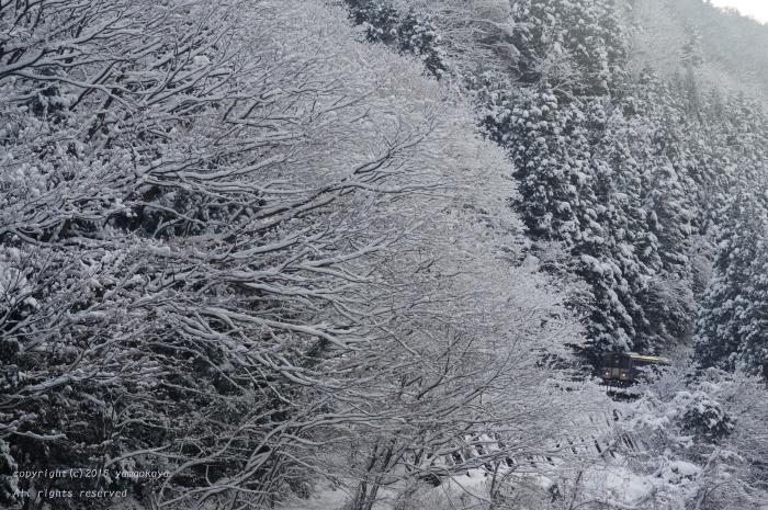 師走の雪に_d0309612_06533252.jpg