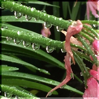 昨夜からの雨も・・・・。_e0054438_1049121.jpg