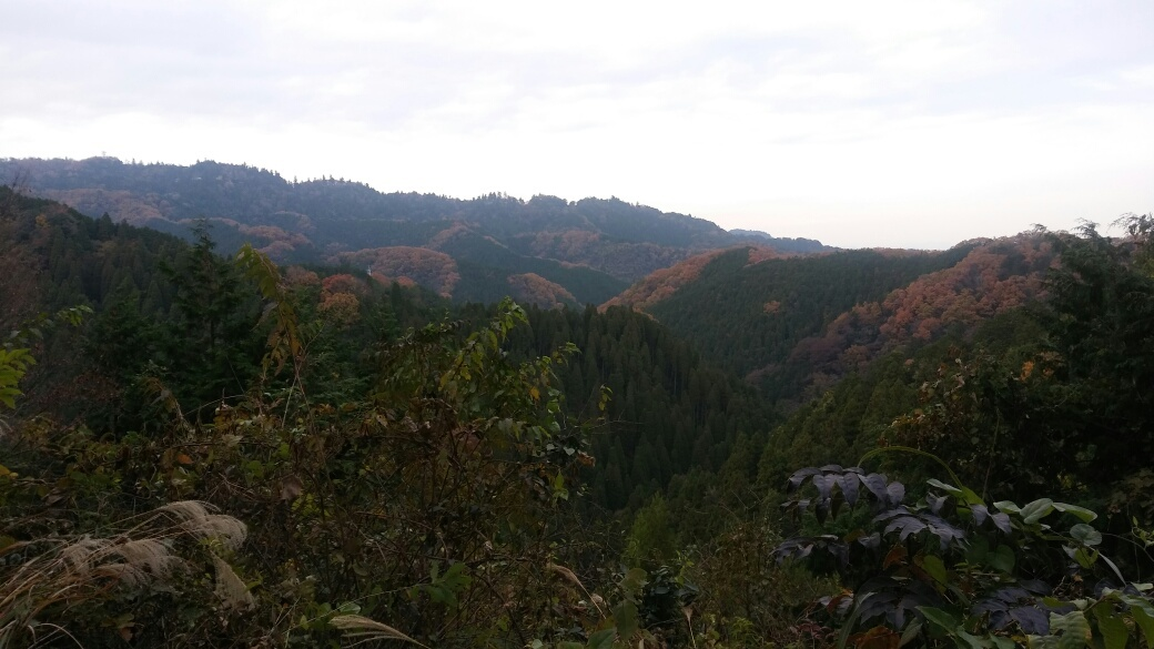 今年三度目の南高尾山稜を歩く_e0232277_12003170.jpg