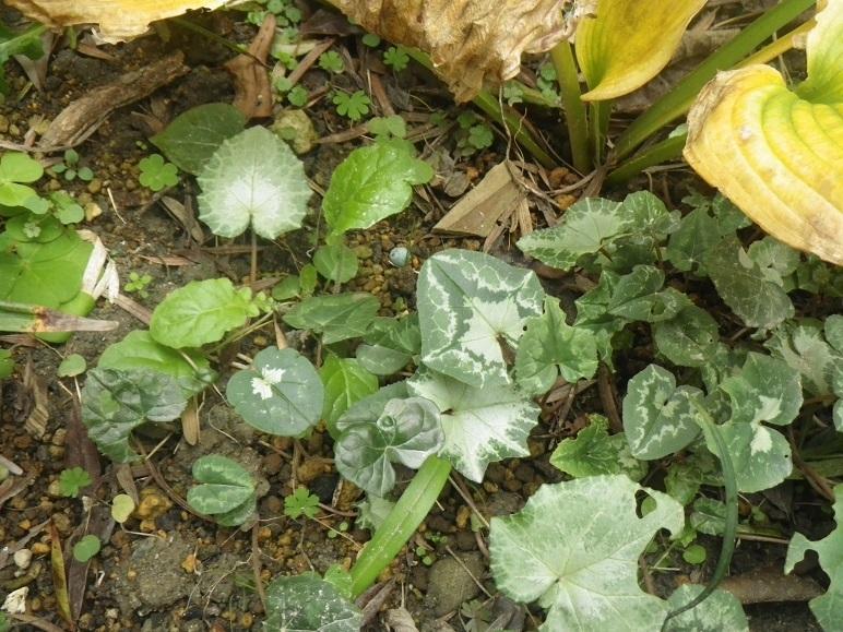 東の庭 12月1日_d0119688_19020530.jpg