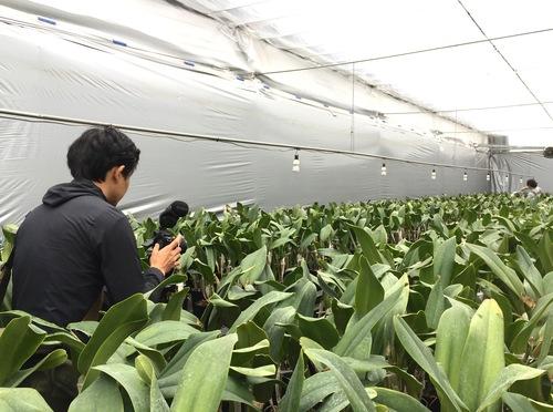 11/2 ガンの撮影_カトレアの山野井洋蘭 / Gan\'s shooting at Yamanoi Orchid Farm_a0216706_1704957.jpg