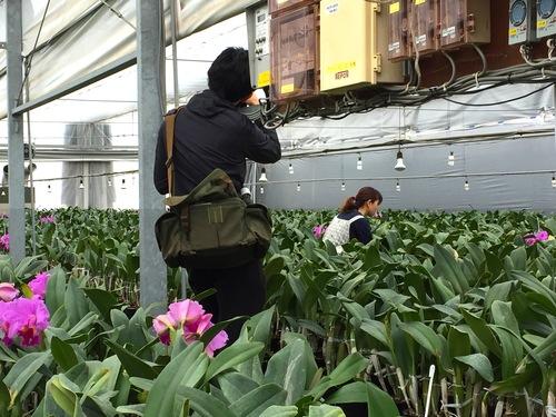 11/2 ガンの撮影_カトレアの山野井洋蘭 / Gan\'s shooting at Yamanoi Orchid Farm_a0216706_1705967.jpg