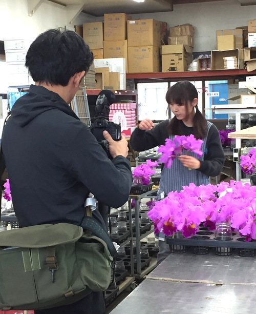 11/2 ガンの撮影_カトレアの山野井洋蘭 / Gan\'s shooting at Yamanoi Orchid Farm_a0216706_19562039.jpg