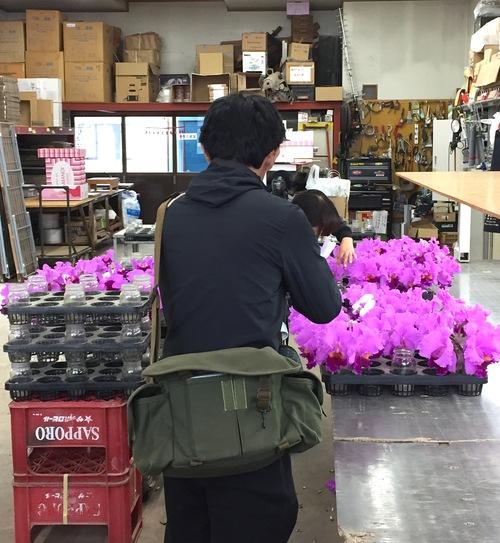 11/2 ガンの撮影_カトレアの山野井洋蘭 / Gan\'s shooting at Yamanoi Orchid Farm_a0216706_19564368.jpg