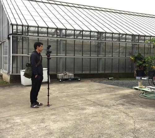 11/2 ガンの撮影_カトレアの山野井洋蘭 / Gan\'s shooting at Yamanoi Orchid Farm_a0216706_20102359.jpg