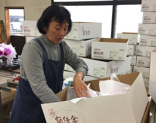 11/2 ガンの撮影_カトレアの山野井洋蘭 / Gan\'s shooting at Yamanoi Orchid Farm_a0216706_2083590.jpg