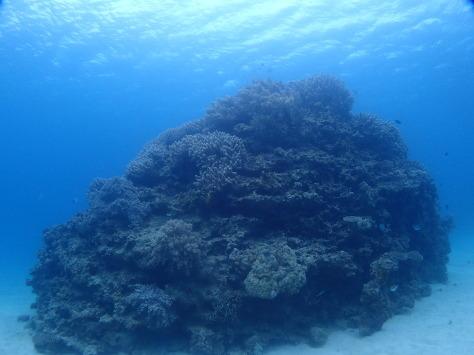 12月2日一本サンゴとカエルアンコウ_c0070933_21473848.jpg