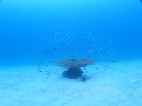 12月2日一本サンゴとカエルアンコウ_c0070933_21483231.jpg