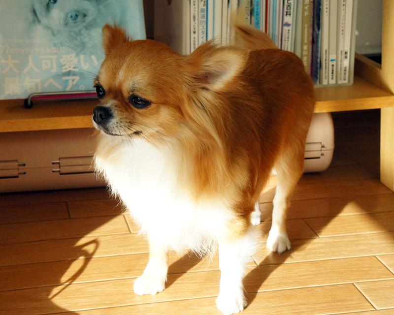 アポロちゃん★レオ君★桃ちゃん_d0265342_239329.jpg