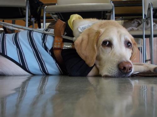 盲導犬使用者の会での写真教室_d0170694_16371104.jpg