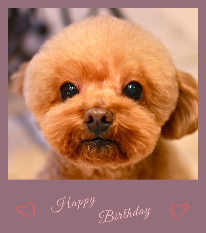 Happy Birthdayピュアちゃん♡_d0060413_19534044.jpg