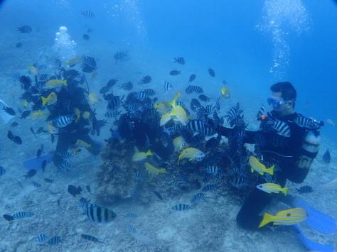 12月3日マクロファンにダイバーに近い体験ダイバー!!_c0070933_21110183.jpg