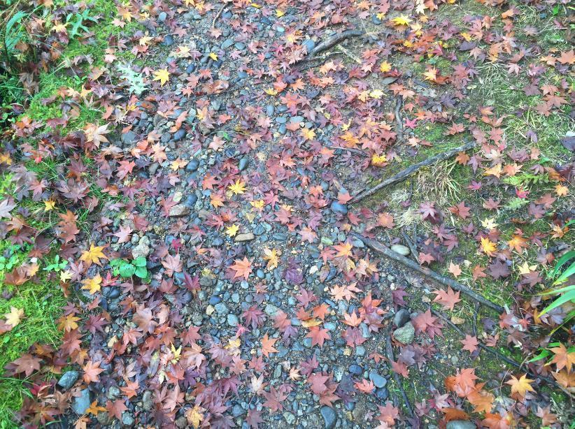 秋のおわり 冬のはじまり_c0331470_00510961.jpg