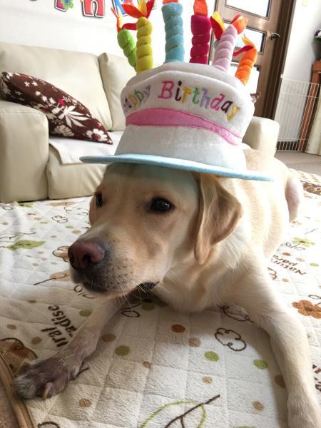 幸たん、2歳のお誕生日♪_c0028792_2336273.jpg
