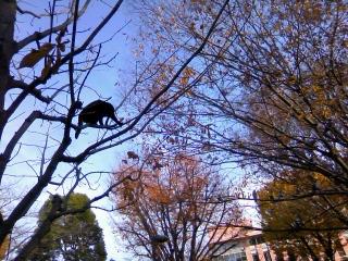 猫も木から落ちる??_b0255217_15212761.jpg