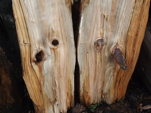 松の木を割ってみると_f0206159_17312342.jpg
